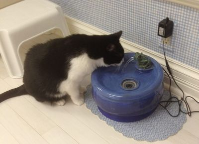 Oreo with an Ebi drinking fountain
