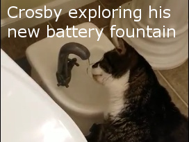 crosby exploring his battery drinking fountain