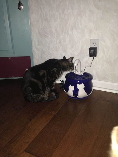 Sammy and Roo with an Ebi drinking fountain
