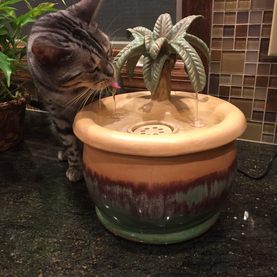 Rory with an EBI cat drinking fountain