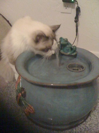 Leo with an Ebi drinking fountain